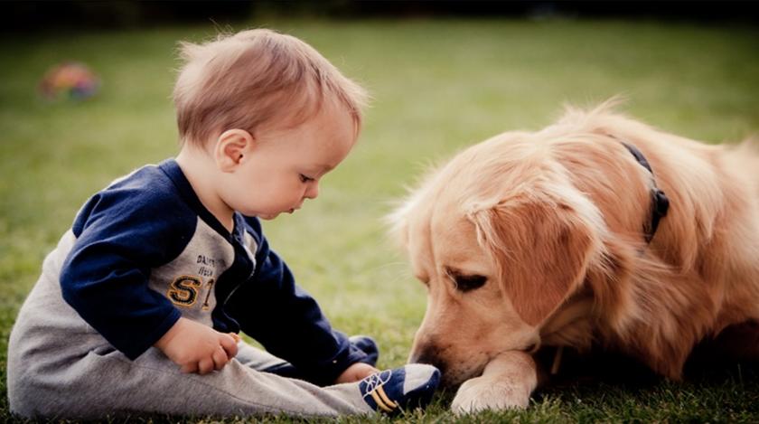 Evcil Hayvanların Bebeklere Etkileri: Bebeğini Evcil Hayvanla Birlikte Büyütmeye Dair Merak Ettiğin Her Şey!